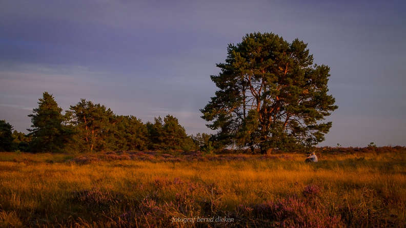 Itterbecker Heide-106.JPG